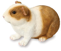 Short Haired Guinea Pig Ornament Figurine